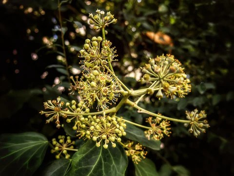 What Plants Can Teach You: Consciousness and Intelligence in Nature