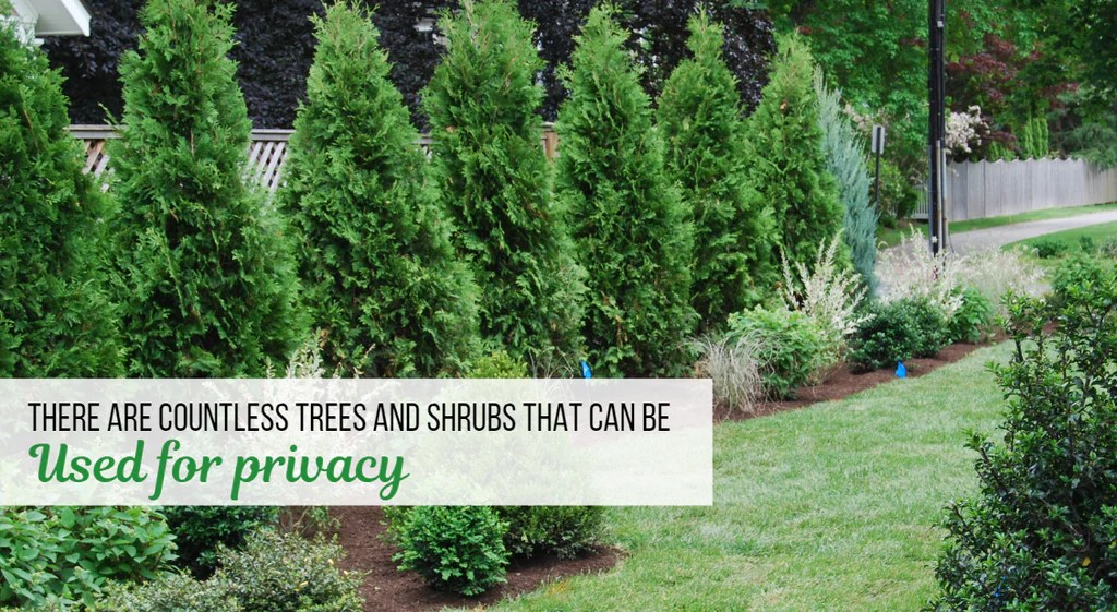 how to choose the best privacy trees