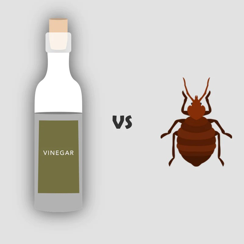 Bed Bugs and Vinegar - Will the Acidity of Vinegar Kill ...