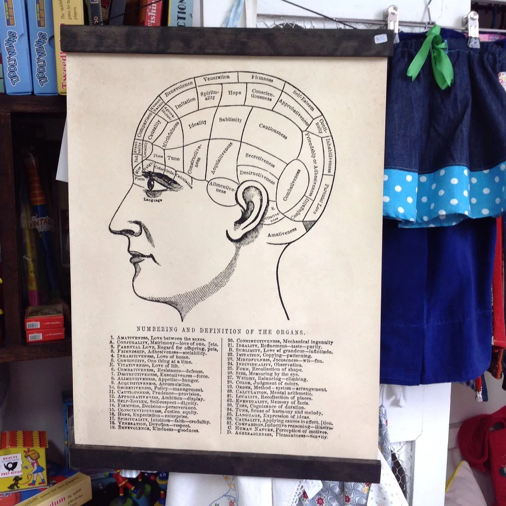 hight resolution of pull down chart vintage phrenology diagram