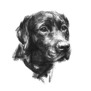 labrador sketch loyalty dog prints lab drawing