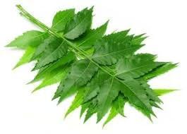 Top Health Benefits Of Neem Herb