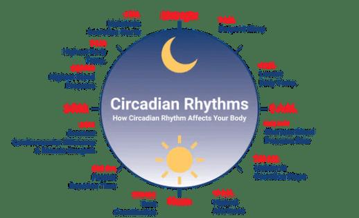 Circadian Rhythms: How Circadian Rhythm Affects Your Body