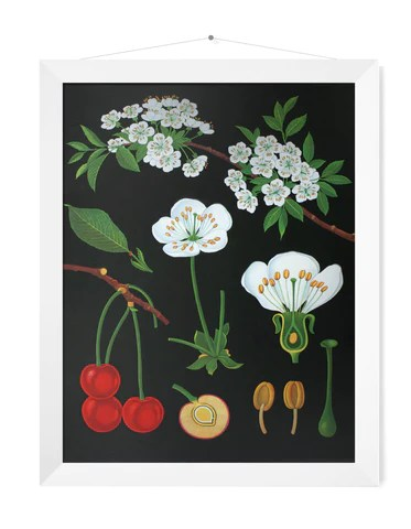 Small botanical prints also wallography wall charts posters and advertising rh