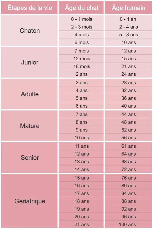 Comment Calculer L'âge D'un Chat : comment, calculer, l'âge, Véritable, Votre