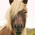 How To See The Corolla Nc Wild Horses For Free For A Fee Obx Stuff