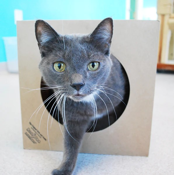 Hide and Sneak Paper Bag Cat Tunnel from Dezi  Roo