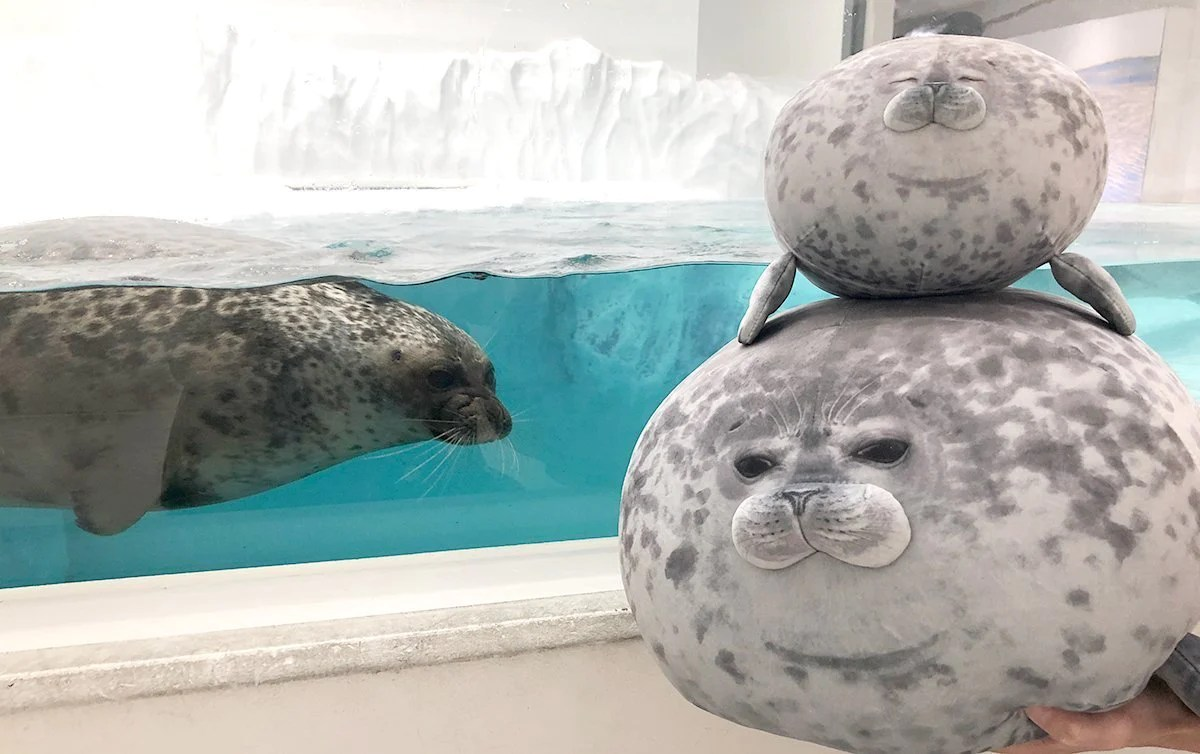 angry chonky seal pillow chonky fat