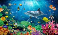 Dophin Coral Colorful Fish Under the Sea 00008 Floor ...