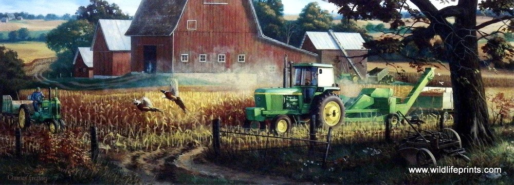 Fall Barn Wallpaper Artist Charles Freitag Unframed Farm Pheasant Print