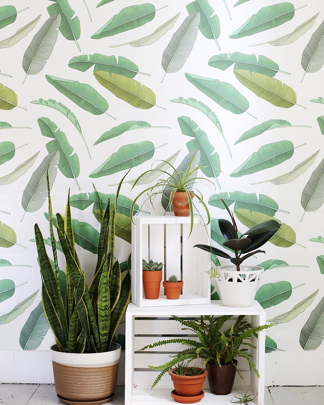 Banana Leaf Wallpaper. Bold. Beautiful. A No Brainer! Only at WallsNeedLove