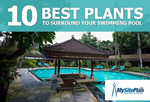 10 Best Plants to Surround Your Swimming Pool  My Site Plan