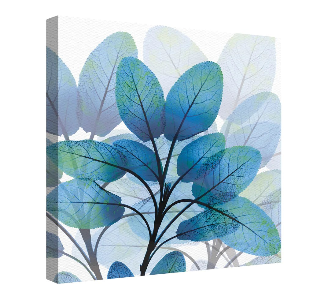x ray blue leaves