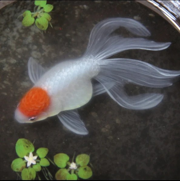 3D Goldfish Painting on Layers of Resin inspired by Riusuke Fukahori  YannyExpress