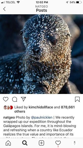 Instagram Post, seal pup