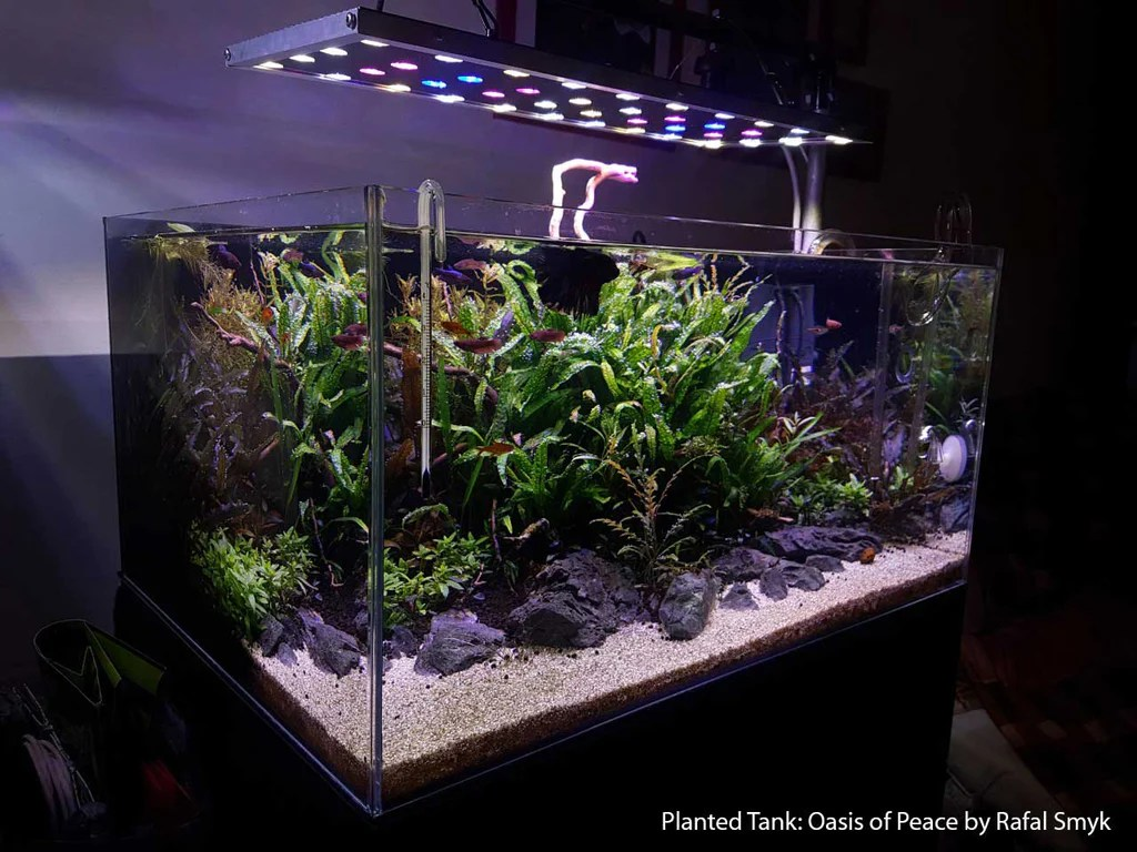 co2 aquarium diagram [ 1024 x 768 Pixel ]