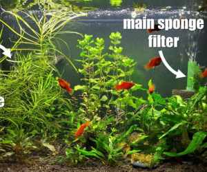 use of two sponge filters to keep quarantine tank cycled