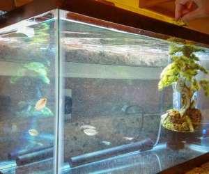 Step 4 - add fish tank decorations to hospital tank
