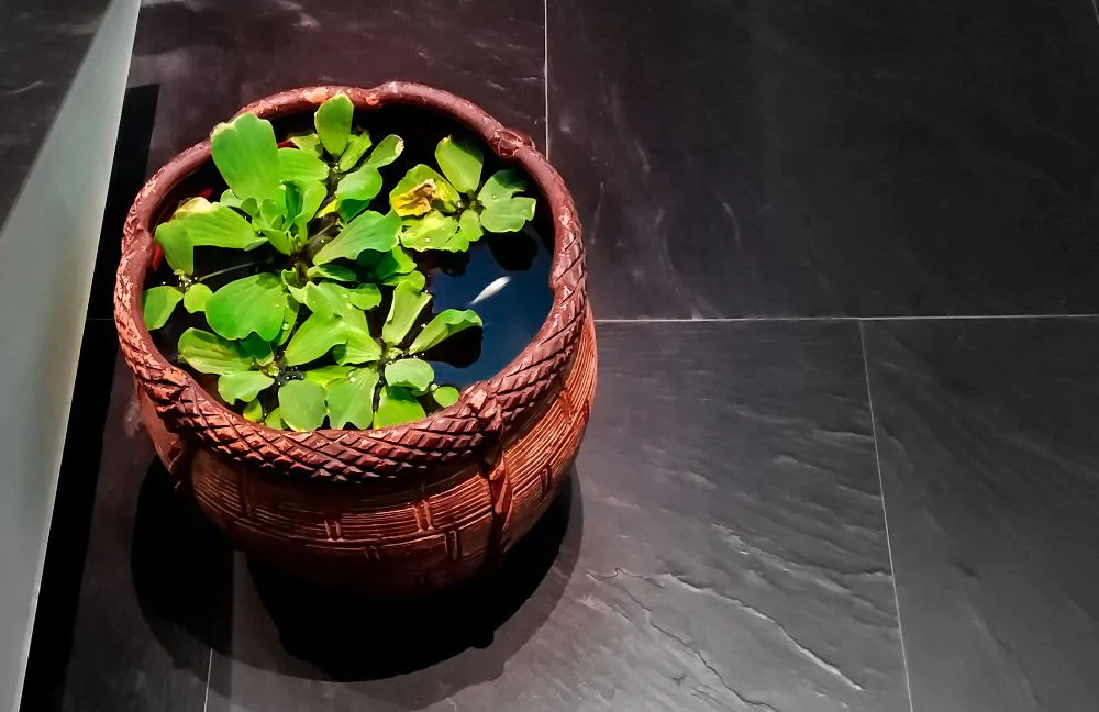 decorative pot used as a mini pond