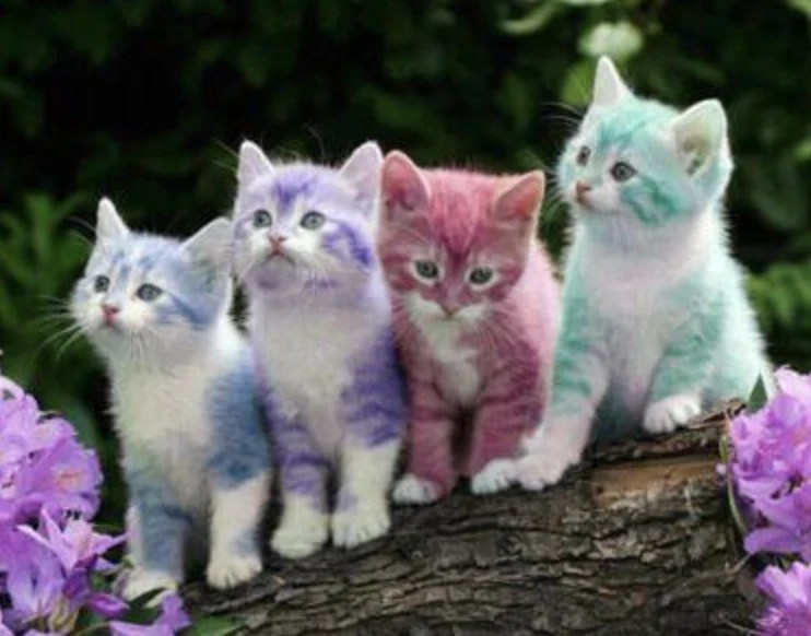 amazing color changing kittens