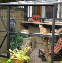 Catios (Cat Patios) You Have to See Right Meow  Meowingtons