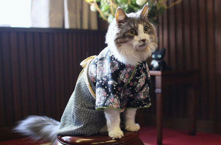 Cats Wearing Kimonos Are Taking Over Japan And Frankly It