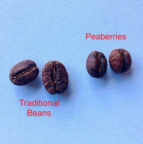 What is Peaberry Coffee  BeanFruit Coffee Co