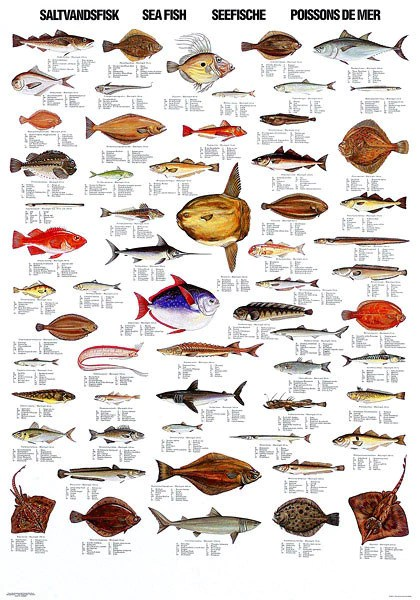 Sea Fish Poster  Coastal Nets Online Store