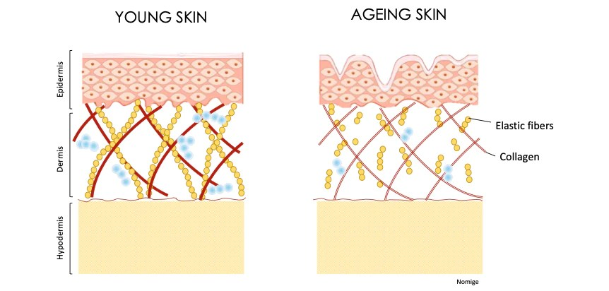 Ageing skin in general: what happens? | Nomige.com