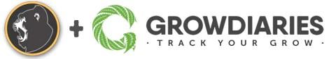 GORILLA GLUE #4 on Grow Diaries