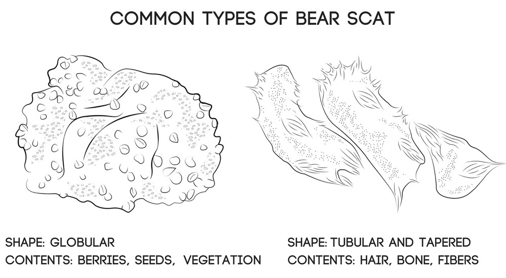 black bear diagram 7 pines resort scat identification guide and grizzly images
