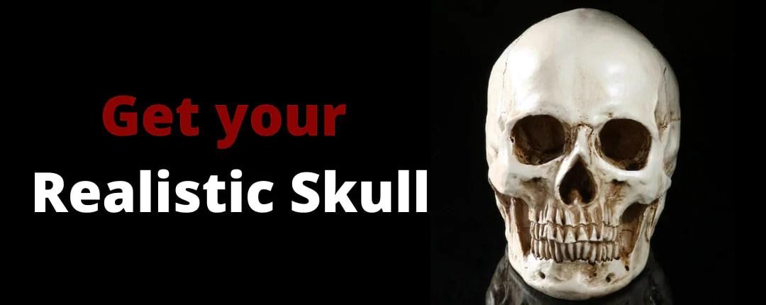 Realistic Skull Offer