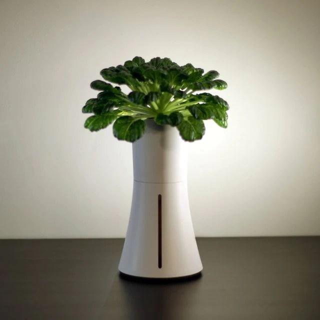 Botaniumを使用して植物栽培