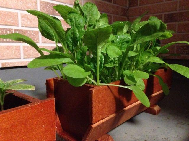 日光が良く当たるベランダでの家庭菜園(ベランダ菜園)