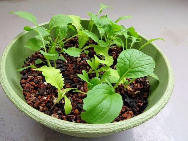 緑のプランターに植物