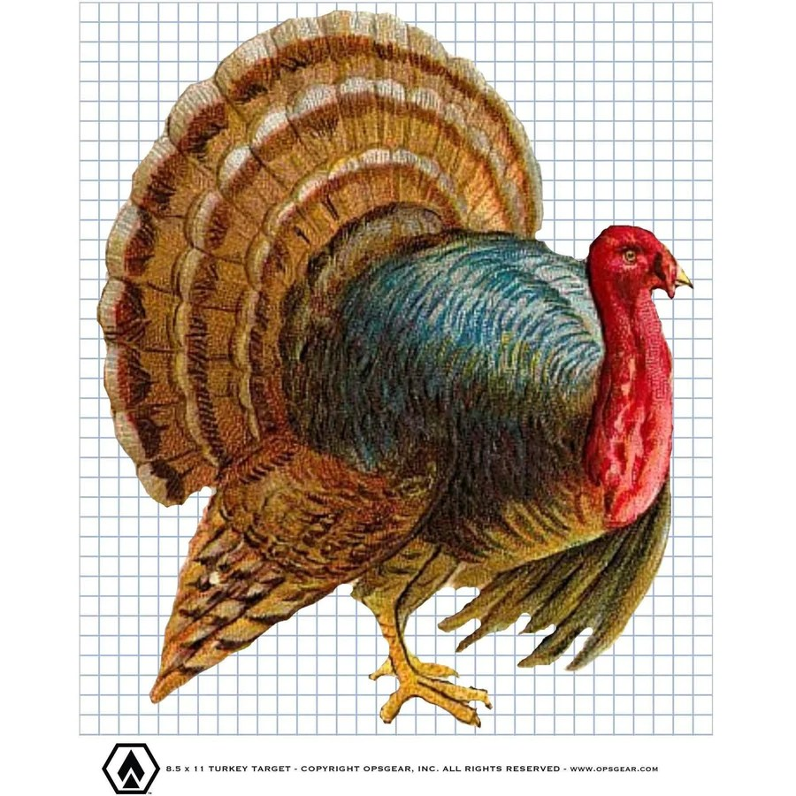 picture regarding Printable Turkey Targets identify Turkey Focus Cost-free 8x10 Printable - Yr of Fresh new Drinking water