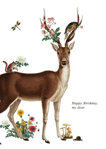 Happy Birthday Images With Deer : happy, birthday, images, Happy, Birthday, Greeting, Flynn, Design