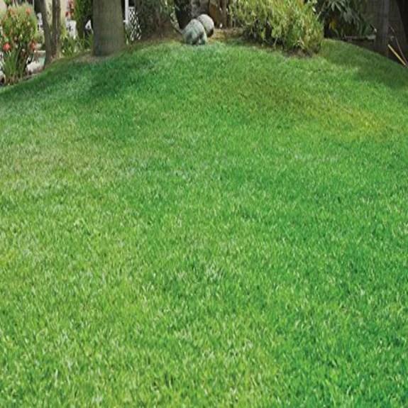 Green Grass Lawn Spray Tuesdaycrates