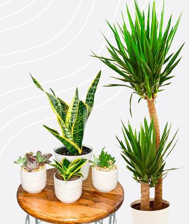 large and small plants with pots to decorate a meditation corner