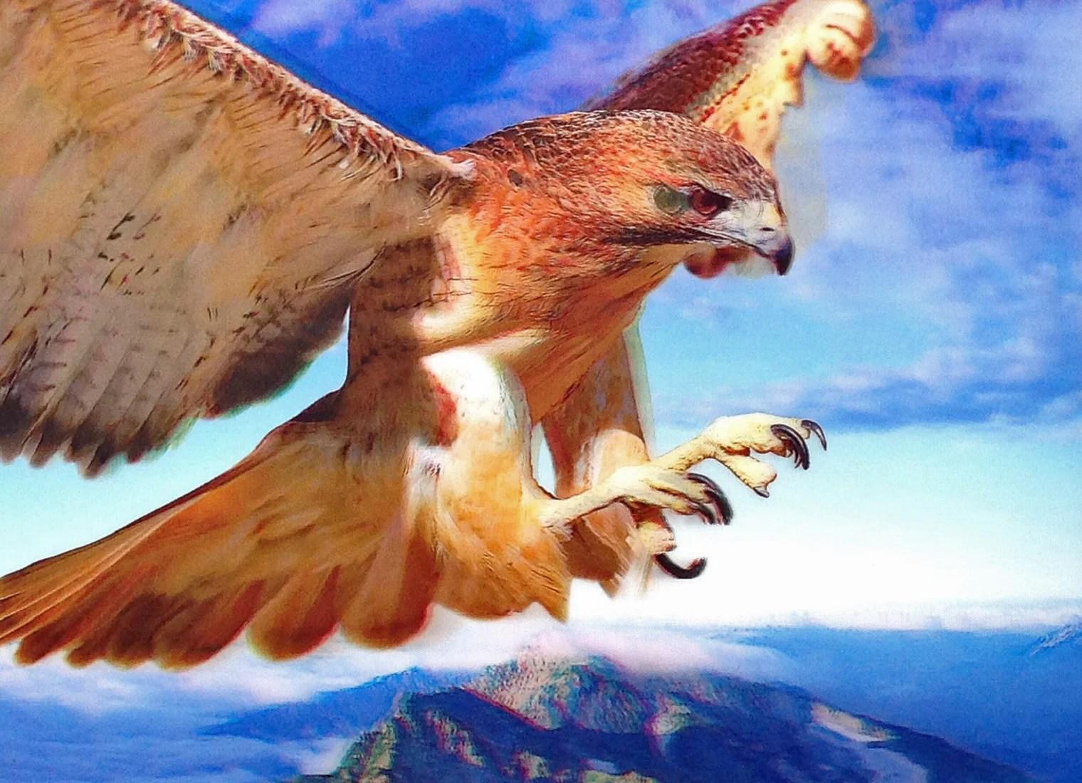 e 20 flying hawk
