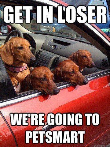 Weiner Dog Meme : weiner, Dachshund, Memes, Wiener, Humor, Smoothe, Store