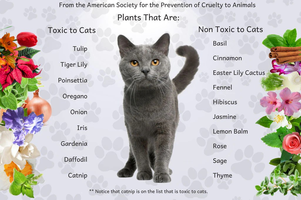 Uncovering the truth about using essential oils with cats plants also organic rh organicaromas