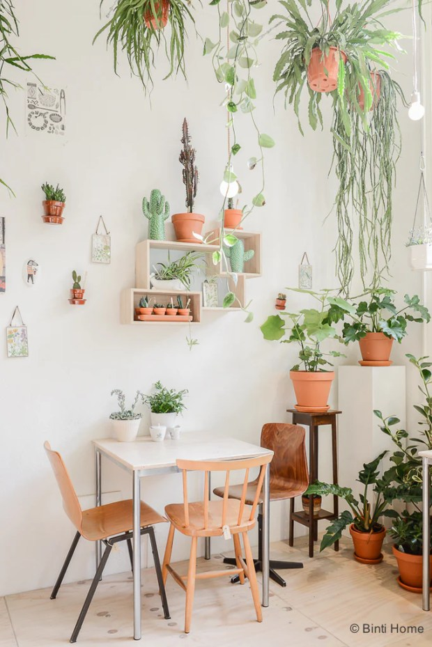 hanging plants in boutique Wilderness Amsterdam