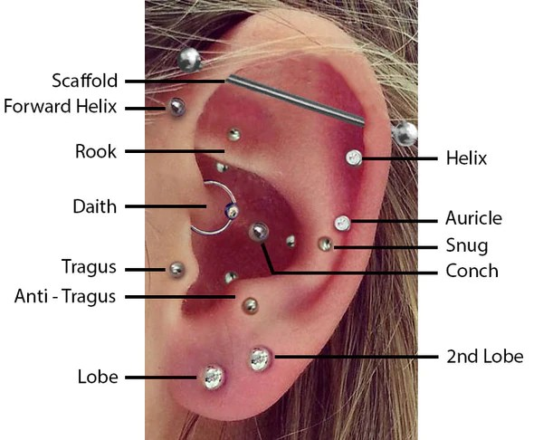 cartilage piercing diagram hopkins 6 way wiring top ear piercings bmg body jewellery this shows the most common that are asked for here at real however depending on anatomy we can do many others too