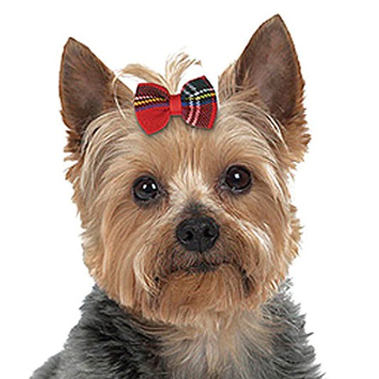 small dog hair accessories