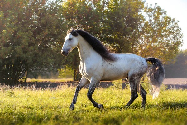 Twins Cute Baby Wallpaper What You Need To Know About Andalusian Horse Temperament