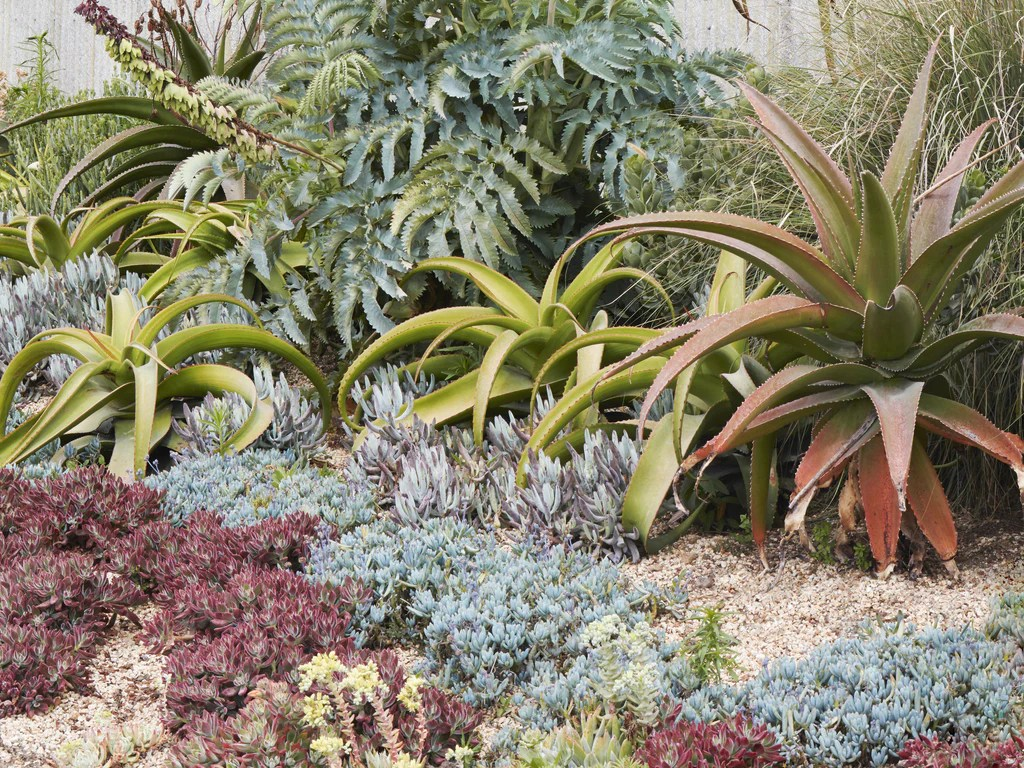 landscaping with succulents - succulent