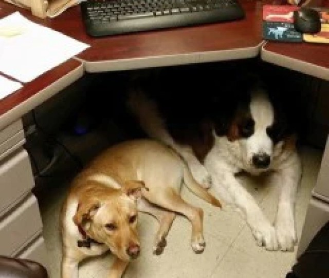 Companies Why Should You Host Take Your Dog To Work Day How Can It