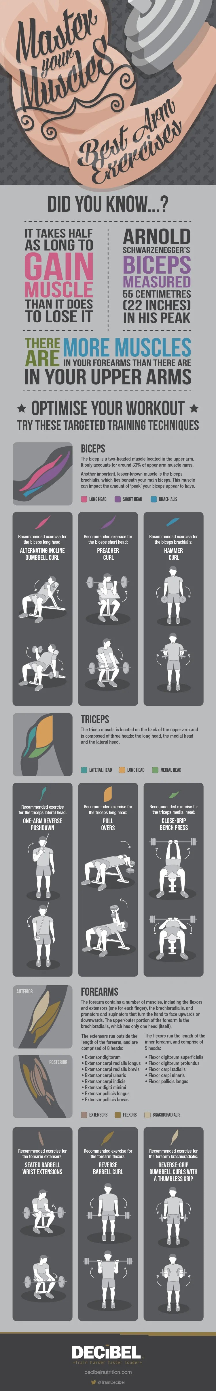 Master Your Muscles: Best Arm Exercises Infographic