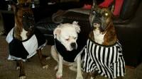 47 cute, fun, and scary Halloween costumes for your Boxer